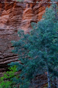 Coolorful sandstone contrasts with the greens of the trees in Zion canyon.