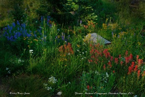 Flowers: Meadows Campground, Steamboat Springs, CO