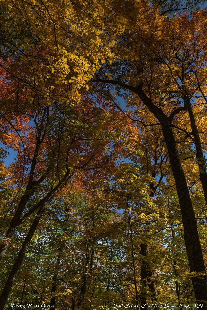 6 Fall Street Style Trends: Fall Colors Minnesota