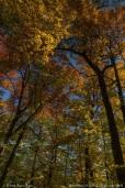 Fall colors Minnesota