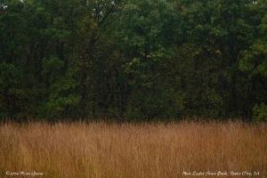 Red Grass