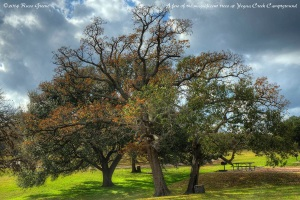Oaks at Yegua Creek Campground
