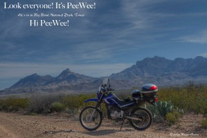 PeeWee in Big Bend