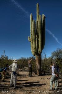 Saguaro Tour