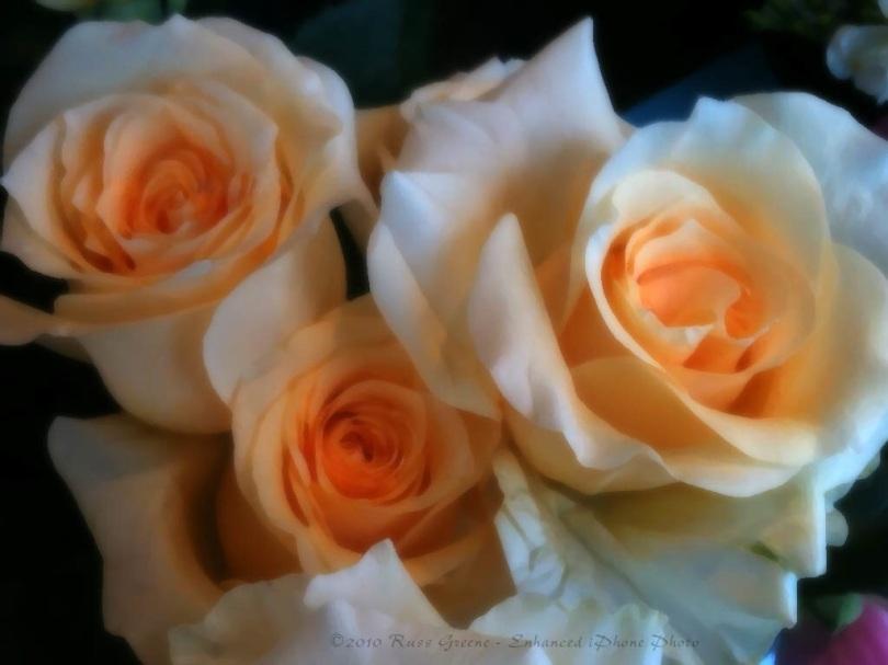iPhone Photo: Roses