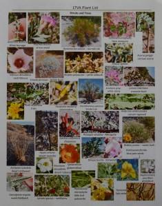 Flower Sheet Handout