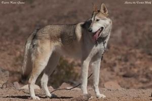 Sierra the Wolf