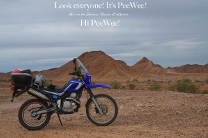 PeeWee in the Sonoran Desert