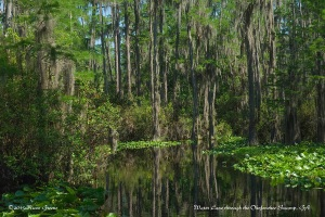 Waterway in the Okefenokee Swamp, GA