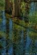 Cypress and reflections, Okefenokee Swamp, GA