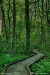 Boardwalk: Andrew Jackson State Park