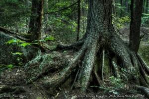 Trees: Peaks-Kenny