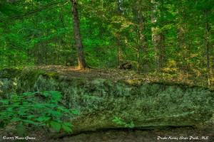 Tree: Peaks-Kenny State Park