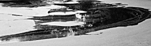 Pond Algae Abstract