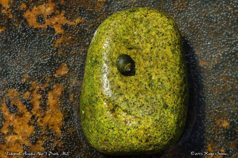 Stuff you find in tide pools