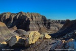 Petrified Forest National Park: Blue Forest Trail