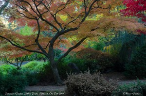 Japanese Garden, Lithia Park, Ashland, OR.